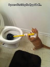 Cat Cleaning a Toilet