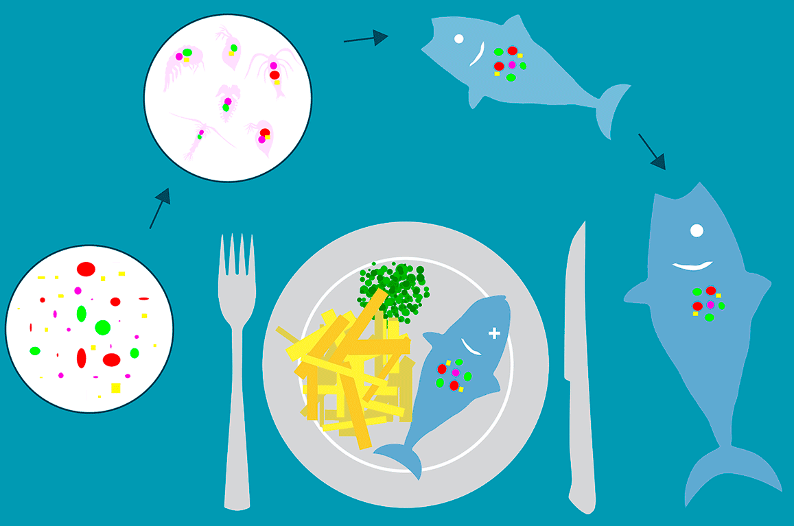 Do you throw away or reuse plastic bags - Microplastics in food chain
