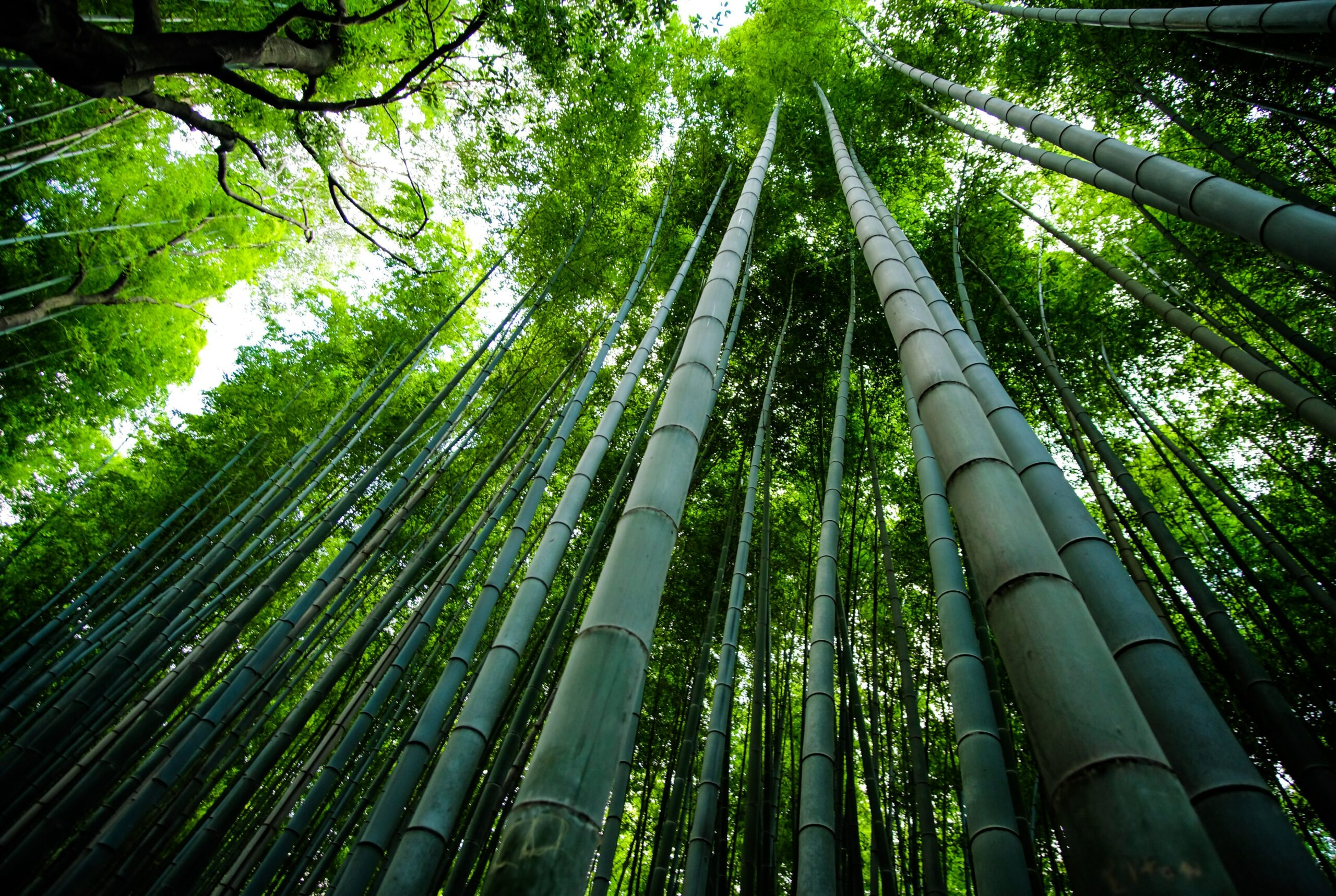 is bamboo eco friendly - bamboo plants