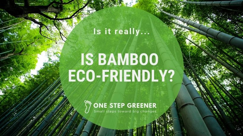 Is Bamboo Eco Friendly - Featured Image