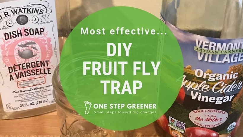 DIY Fruit Fly Trap - Featured Image